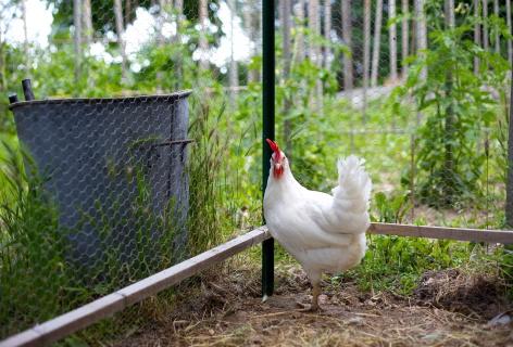 home farming 3